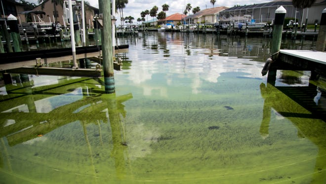 Cyanobacteria, known as toxic blue-green algae, can be seen in the water at the Admiralty Yacht Club off Coon Road in North Fort Myers.