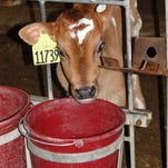 Providing high-quality drinking water for dairy cows
