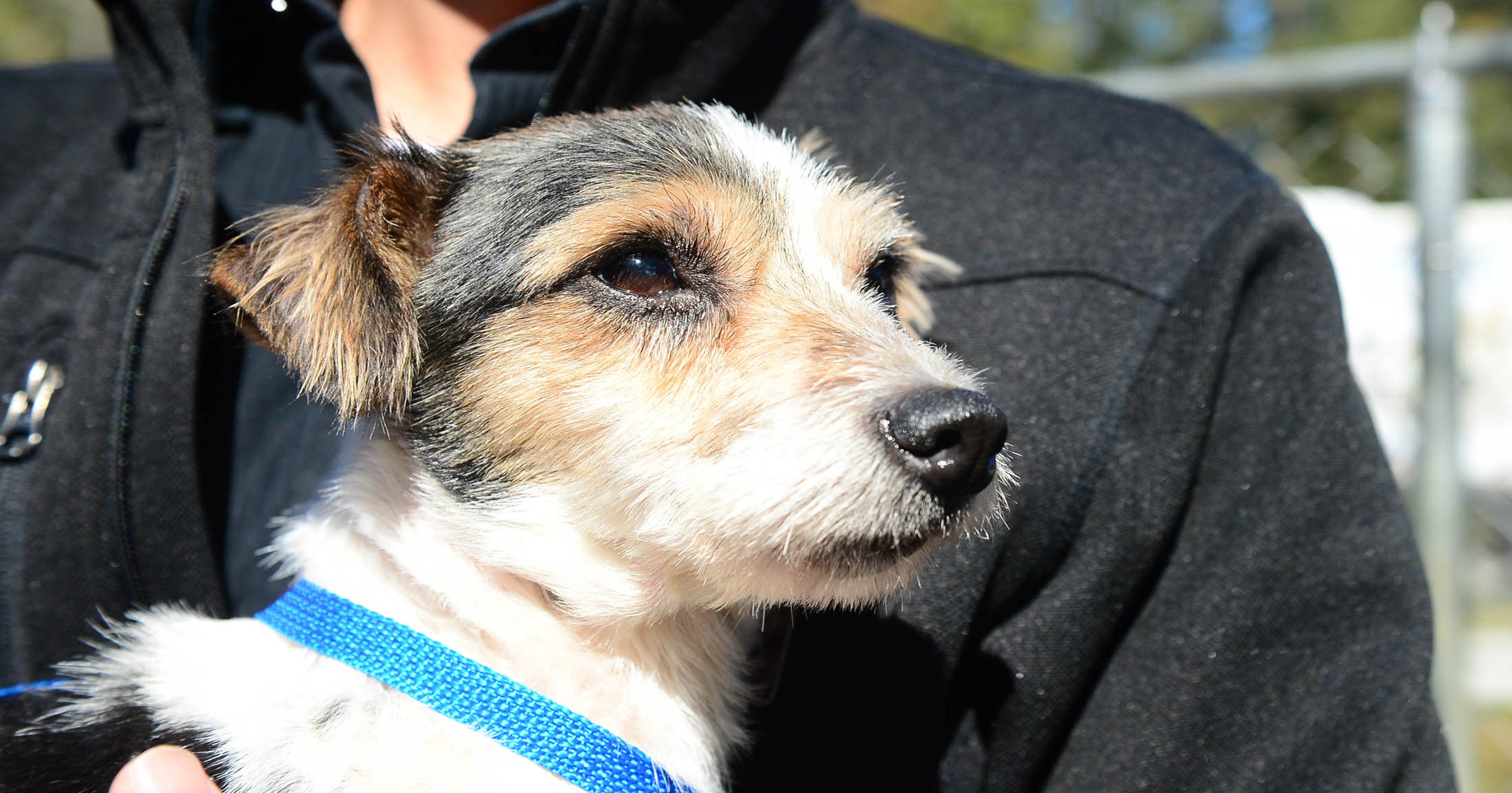 3 dogs ready for adoption from Seaford animal cruelty case