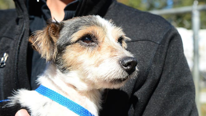 Walter Fenstermacher, Brandywine Valley director of operations holds Gracie, a terrier mix. The dog will be up for adoption at the Brandywine Valley SPCA Georgetown Campus after being rescued from an animal hoarding situation in Seaford.