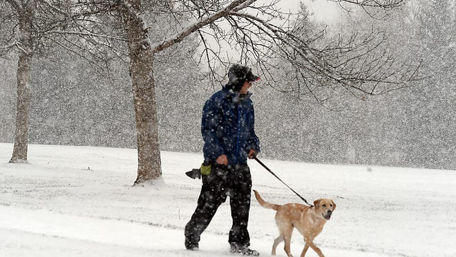 Peter Moses of Fort Collins walks his dog, Ziggy, a seven-month-old yellow lab in her first snow fall at Troutman Park early Tuesday morning Nov. 11, 2014.