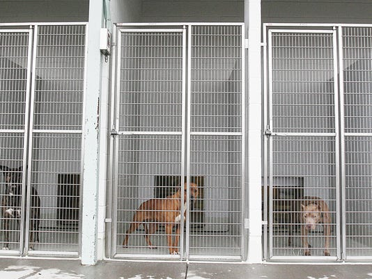 DOG SHELTER FULL