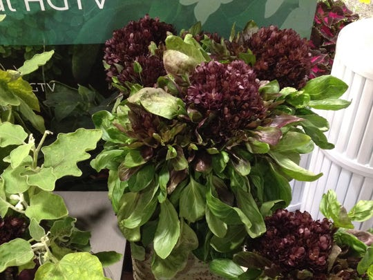 The 3-inch wide flower on Balsamic Bloom basil is edible.