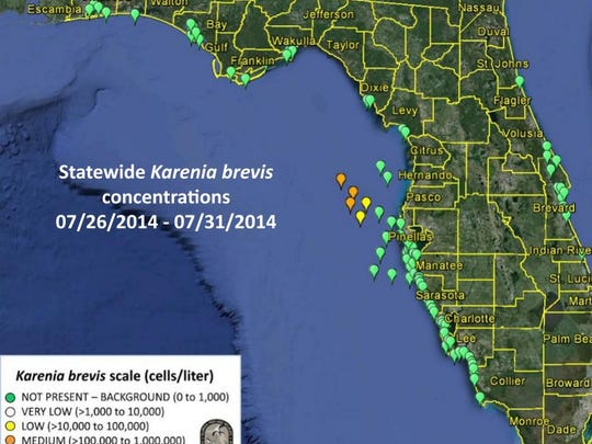 The Florida Fish and Wildlife Conservation Commission announced the presence of the bloom July 25; it is now about 40 miles off Hernando and Pasco counties and measures 80 miles long and up to 50 miles wide.