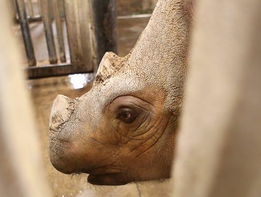 rhino breeding