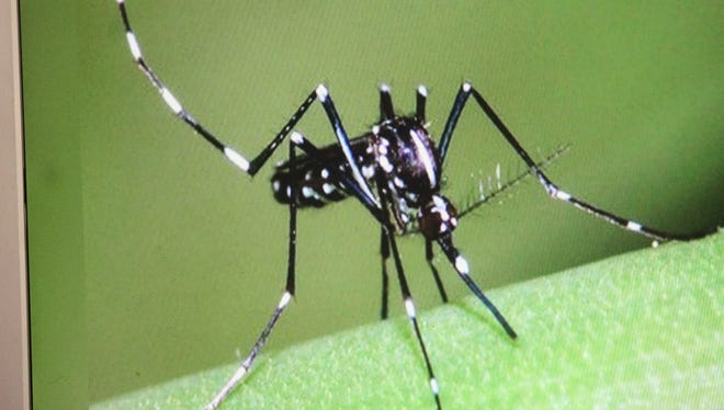 The Aedes aegypti and Aedes albopictus mosquito species have white bands on their legs and can transmit the Zika virus. Both species can be found in New Mexico.