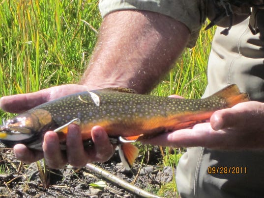Something fishy about the grayling hatchery permit for Fish hatchery michigan
