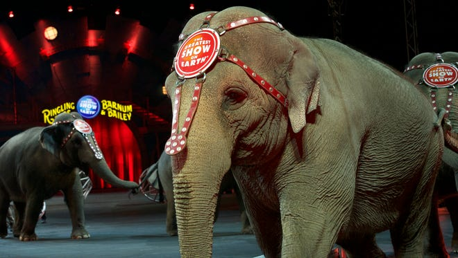 Elephants parade into the arena during a Ringling Bros. show on April 17, 2016 in Fairfax, Va.