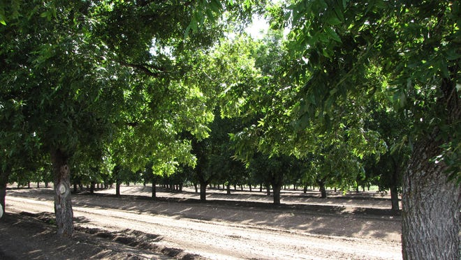 Eldorado Pecans is a commercial pecan orchard in Schleicher County.