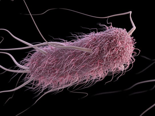 An image of E. coli cells
