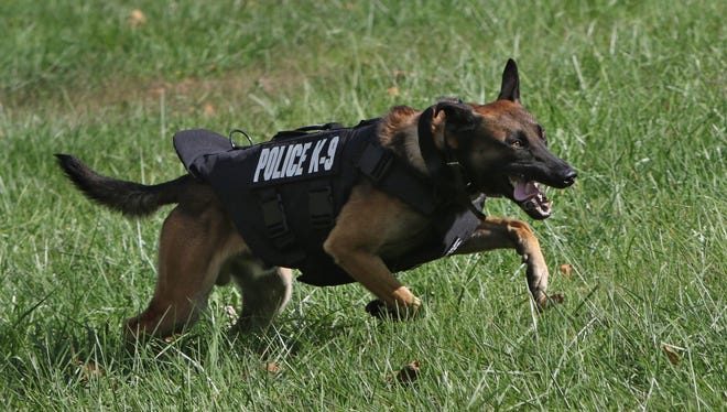 Dover police K9 Gerome trains while wearing a recently donated bulletproof vest at the Dover Police Department Wednesday.