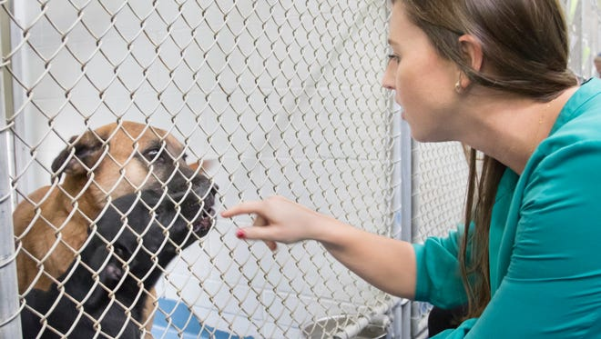 Dr. Johnna Lee checks on the dogs in the kennel at the Escambia Animal Services in Pensacola on Friday, October 27, 2017.  Lee has recently filled the full-time veterinarian position that was vacant for the past year.