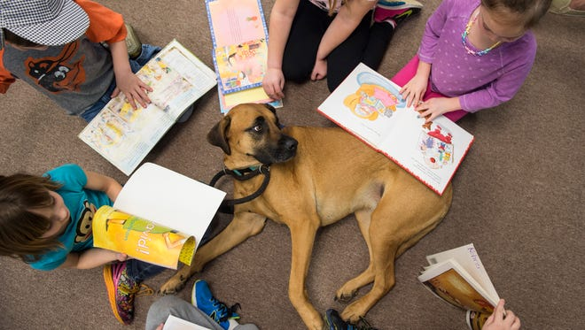 First-graders at Park Hills Elementary School read to Ozzie, a 3-year-old therapy dog, on Tuesday, Feb. 28, 2017. During his weekly visits, Ozzie provides a comforting reading partner as students take turns reading in groupsto the canine companion. Through Precious Paws Therapy Dogs, a Hanover nonprofit started in 2014, Ozzie regularly visits nursing homes, libraries, hospitals and schools in the area.