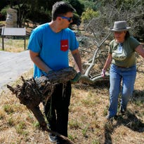 California State University, Monterey Bay student Dale Wilkison and Return of the Natives director Laura Lee Lienk pull a dead tree during the Salinas Earth Day Celebration on Saturday at Natividad Creek Park in Salinas.