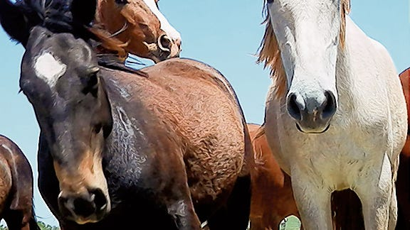 Dona Ana and Sierra counties are showing cases of vesicular stomatitis.