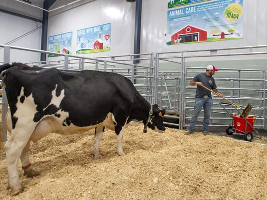 Exchange Birthing Cows Fair