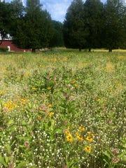 Bugler Prairie at Woodland Dunes Nature Center and