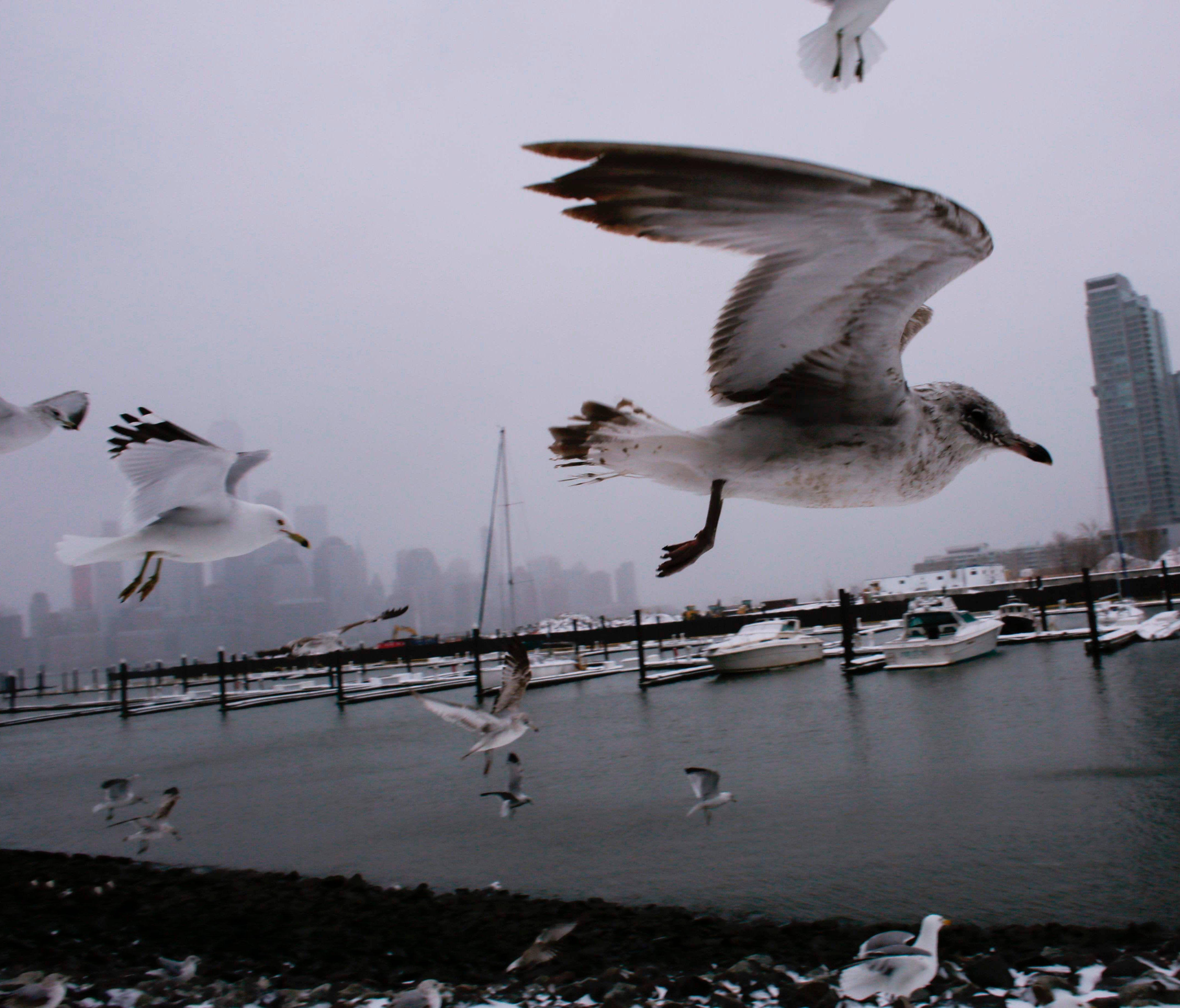 The skyline of New York appears in the distance as seagulls fly over the water's edge on March 14, 2017 in Jersey City, New Jersey.