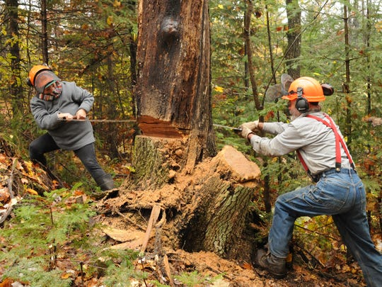 Janice Penn, left, of Highbridge and John Olson of Ashland cut into the good oak with a crosscut saw.