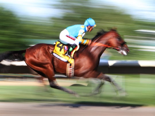 Oceanport NJ ,  08/02/2015  American Pharoah comes down the home stretch to win  the William Hill Haskell Invitational at Monmouth Park  Staff Photo Asbury Park Press  /James J. Connolly