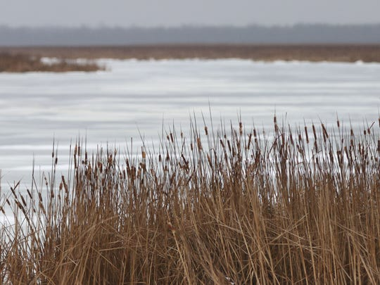 Cattails line the edge of Broughton Marsh Park Tuesday January 10, 2017 in Elkhart Lake.