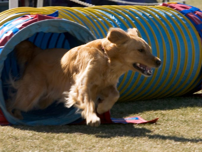 2/26-3/1: FIESTA CLUSTER DOG SHOW AND AGILITY TRIAL