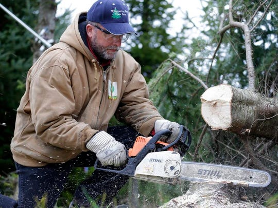 Whispering Pines Tree Farm employee Dean Krzewina cuts pieces from the stump of the balsam fir tree that will be displayed in the White House throughout the Christmas season on Tuesday in Oconto.
