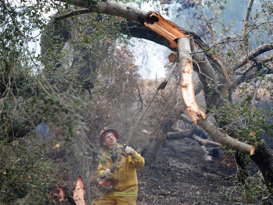Troy McKinney with Cal Fire cuts falling trees along