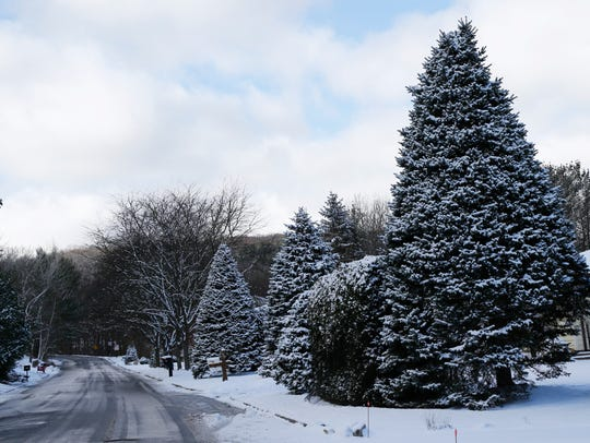 Snow-covered trees on Moore Avenue on the south side of Binghamton on Thursday.