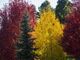 El otoño llega a Flagstaff, Arizona, y con ello un