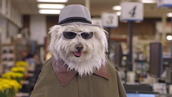 Dogs go to extremes for Doritos in Super Bowl ad.