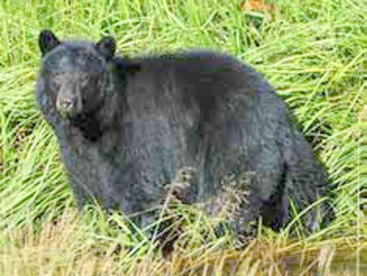 bearphoto.jpg