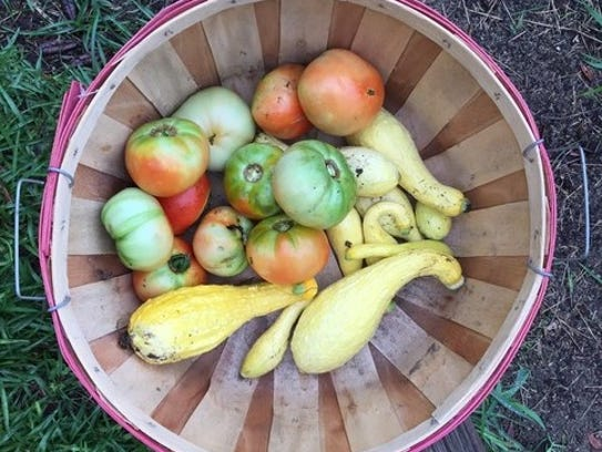 By mid-May, summer squash should be coming in, with