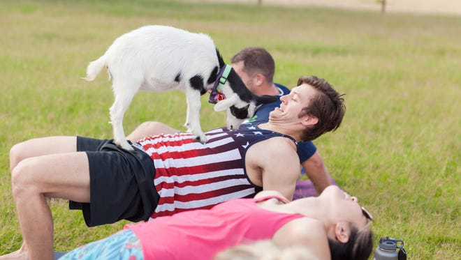 """Goats often will jump onto people as they do """"goat yoga"""" on a farm in Gilbert."""