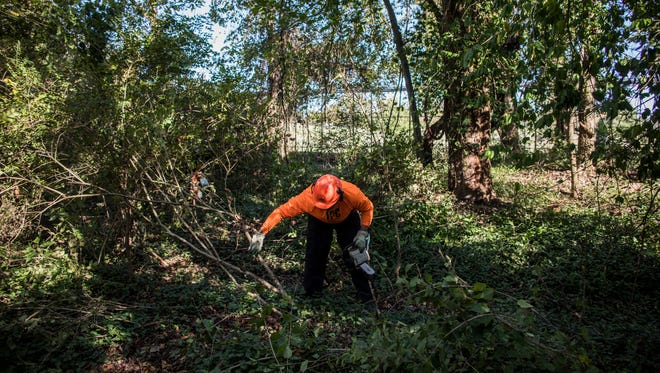 Martin Clark of Invasive Plant Control, Inc. chops out invasive plants in the Richland Creek Watershed. The Richland Creed Watershed Alliance is working to remove the invasive species to promote growth of native plants.