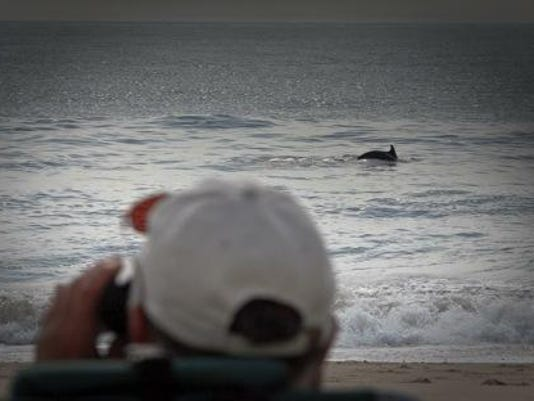 dolphincount