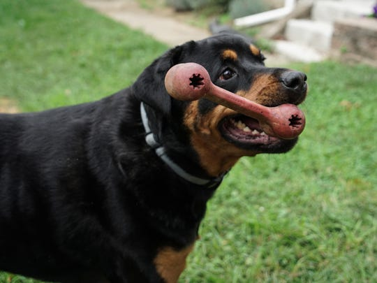 Junior, a Rottweiler born with several illnesses, was the inspiration for his owner Dan Lavin to start a fresh pet food line to help cure him and other dogs of ailments.