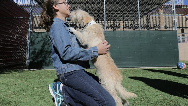 Rebecca Raley, 12, gets to know a terrier at the El Paso Animal Services Tuesday as she and her mother look to adopt another dog. Animal Services has been working toward becoming a more compasionate center.