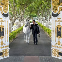 Wayne Newton walks a horse at the trademark white and gold gates that guard his mansion. Now open to the public for tours, Newton's estate includes an Aramus Arabian horse stable.