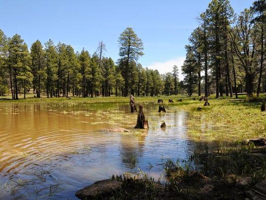 Pine Spring Trailhead
