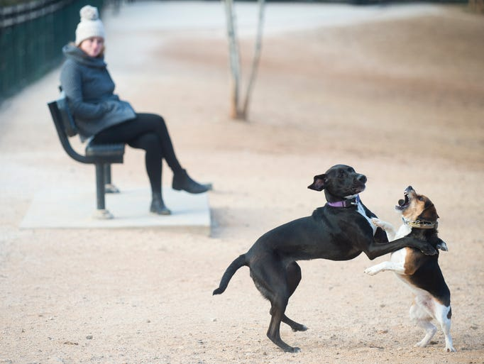 Dogs play as a bundled-up owner watches from afar at