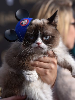 "Grumpy Cat attends the premiere of Disney's ""Cinderella"" at the El Capitan Theatre on March 1, 2015 in Hollywood, California.  (Photo by Kevin Winter/Getty Images) ORG XMIT: 537620879 ORIG FILE ID: 464915624"