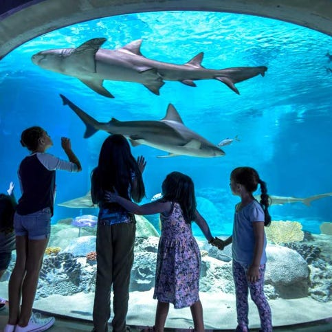 Best kids things to do in Phoenix in July: Splash pad parties, shark feeds and free fun