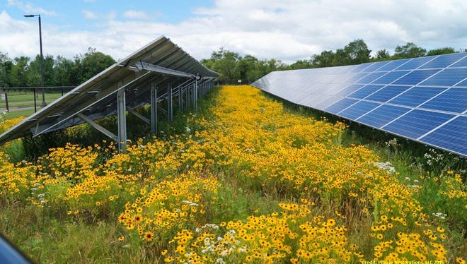 This solar array in Ramsey was built by Connexus Energy in 2014 and seeded with pollinator habitat by Prairie Restorations Inc.