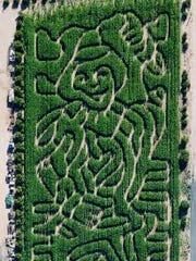The corn maze at Vertuccio Farms.