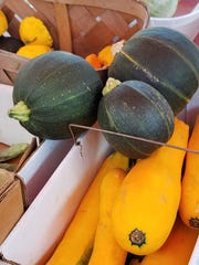 It's squash season. Find a bunch of varieties including golden and 8-ball zucchini, yellow squash, and pattypan squash at the Larkins Produce  display at the Historic Newburgh Farmers Market.