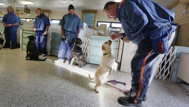 Inmate Denis Berkey, 61 of Dearborn, right trains Lena, 2 a rescued dog at Lakeland Correctional Facility in Coldwater, MI on December 11, 2015.