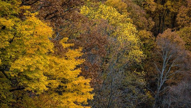 Peak autumn foliage is seen in Brown County State Park, Nashville, Ind., Monday, Nov. 6, 2017.