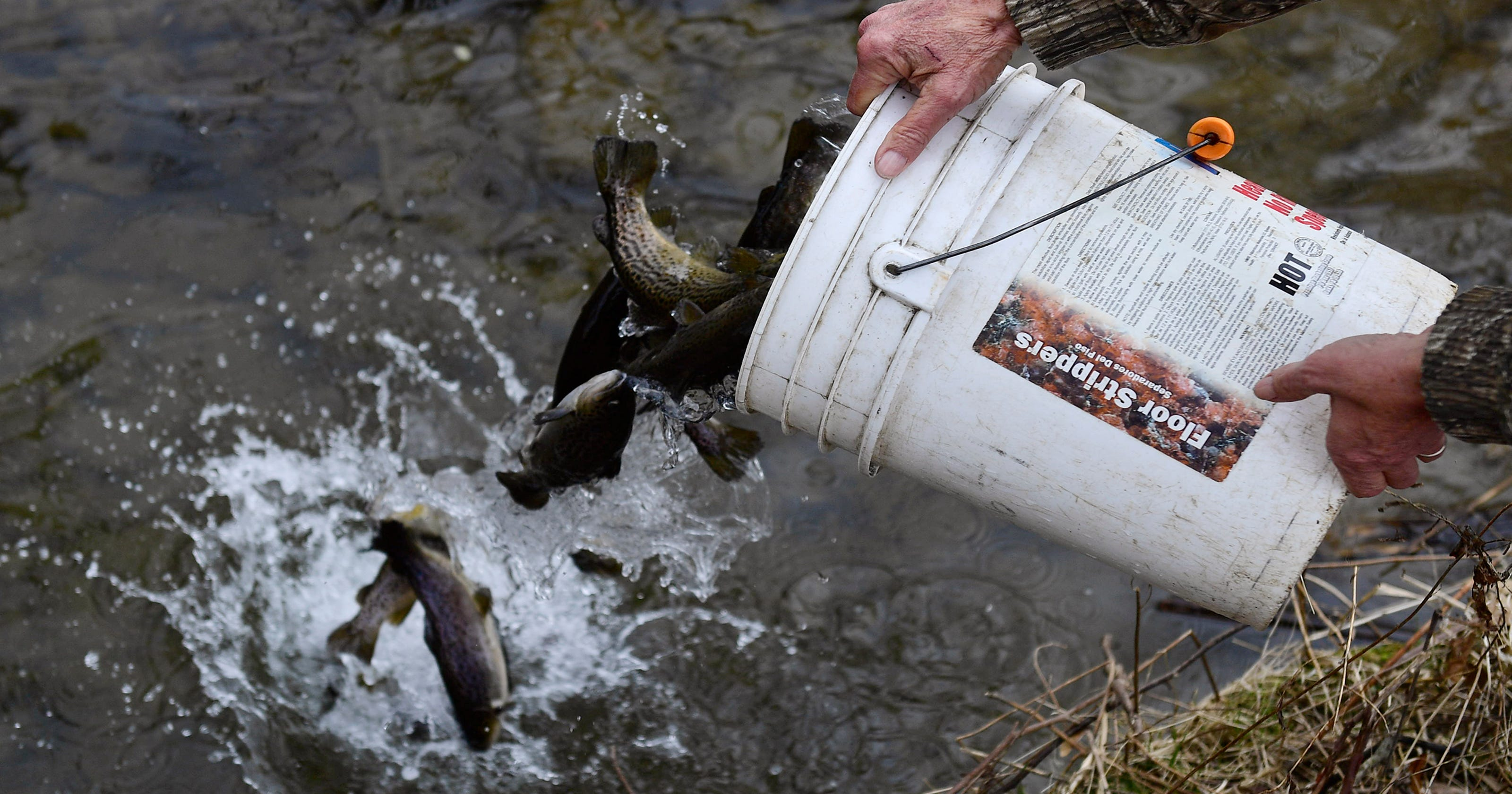 Stocked trout numbers stable in Pa  amidst threat of hatchery closures