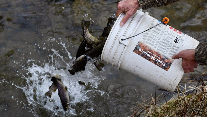 Phil Gladfelter from North Codorus Township dumps a bucket of trout in the East Branch of the Codorus Creek on Thursday, March 15, 2018.